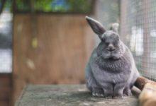 клетка кролика