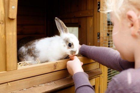 Дезинфекция клеток кроля