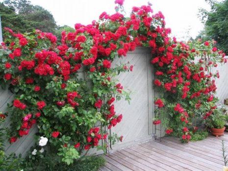 Розы и дверь