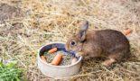 Комбикорм кролика