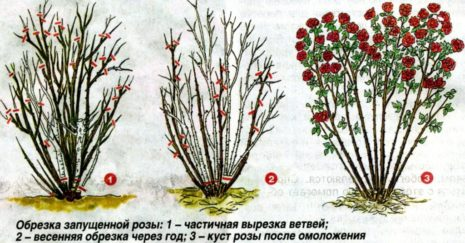 Типы обрезки роз