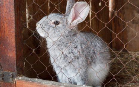 дезинфекции кроля