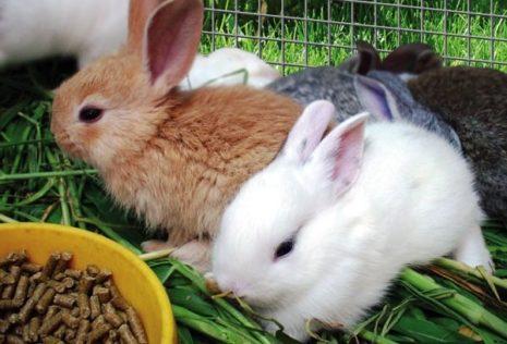 кролики комбикорм