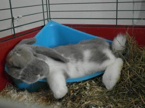кролик в туалете