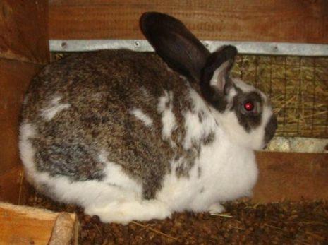 роды кроликов