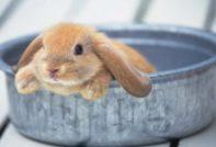 кролик в ванной