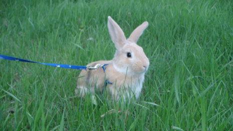 кролик гуляет