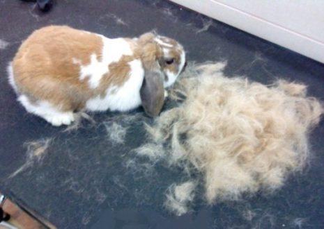 шерсть кроликов