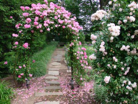 Цветы Годен парфюм