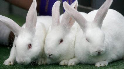 расстройство у кроликов