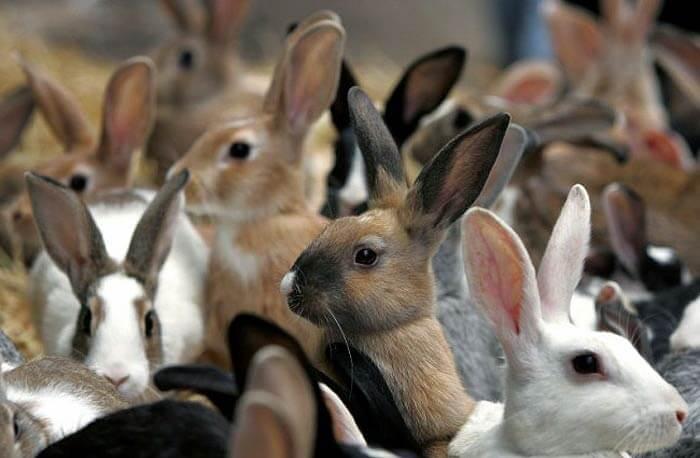 Готовые бизнес планы кроликов инновационно инвестиционный бизнес план
