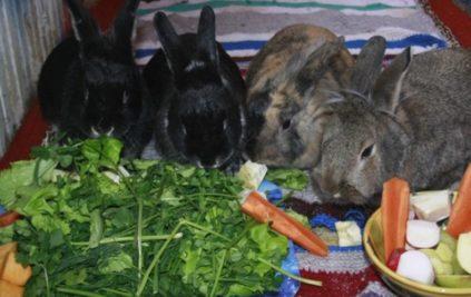 что едят кролики в домашних условиях список