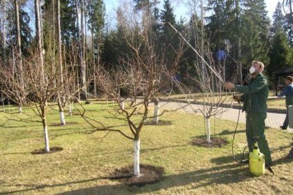 опрыскивание груш весной