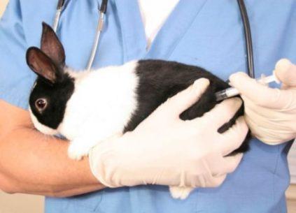 прививки кролям