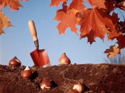 работа в огороде в октябре