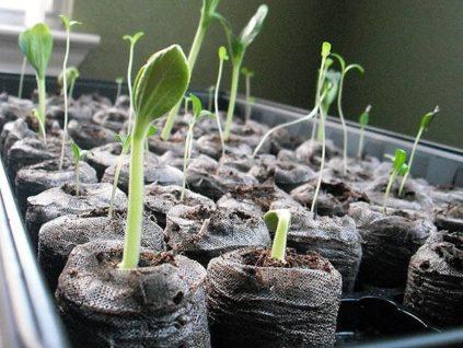 Посев семян на рассаду в марте по лунному календарю в 2020 году