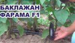Фарама