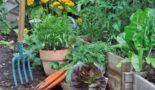 Фазы луны в мае 2019 года для садоводов и огородников