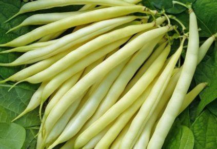 fasol masljanyj korol