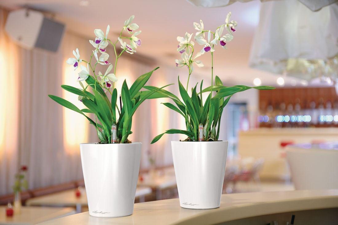 gorshki dlja orhidei