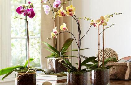 gorshok-dlja-orhidei-svoimi-rukami