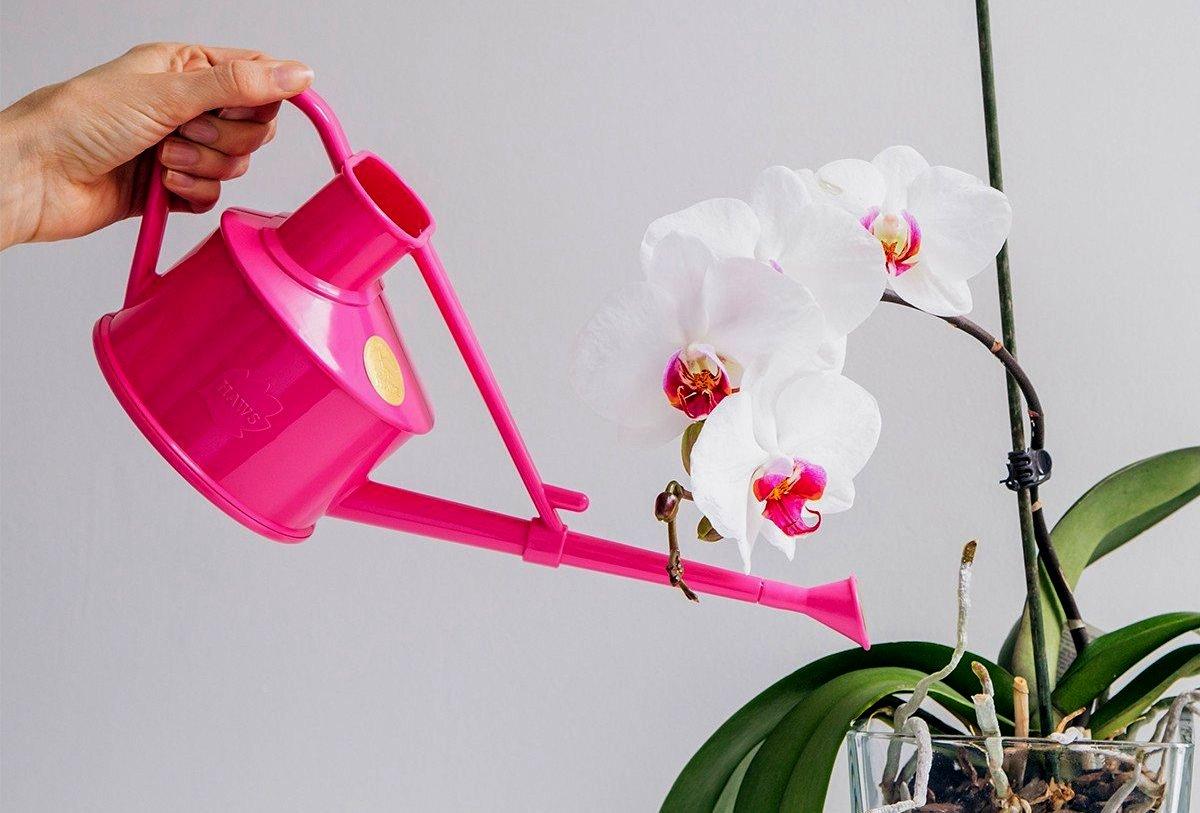kak-polivat-orhideyu.jpg