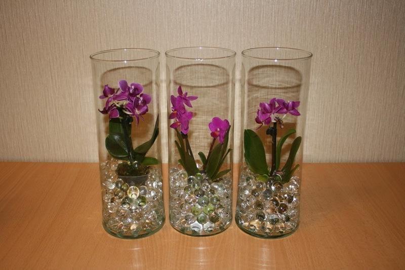 Оргидеи в аквагрунте