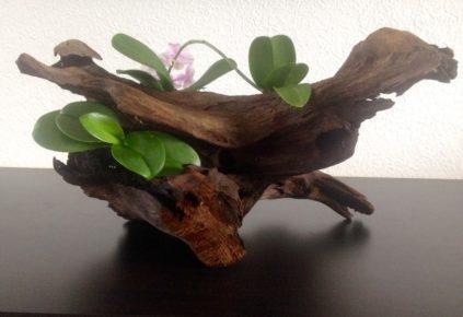 orhideya-na-bloke