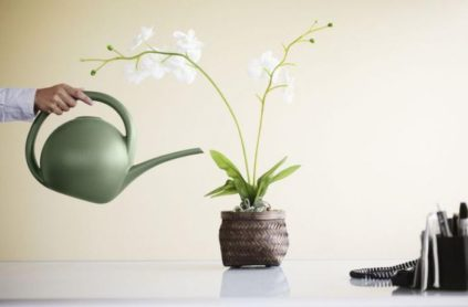 poliv orhidei