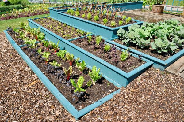Фазы луны в мае 2020 года для садоводов и огородников