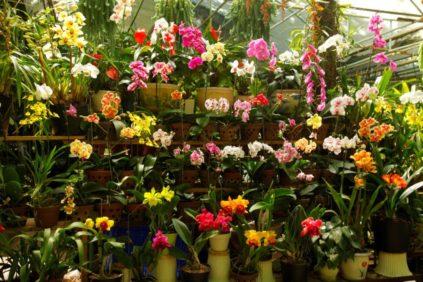 magazin orhidej