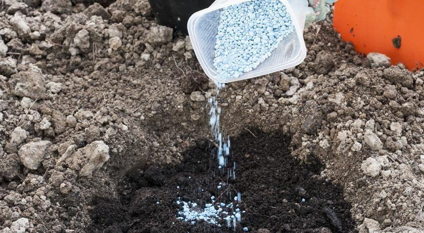 почва для посадки мирабилиса