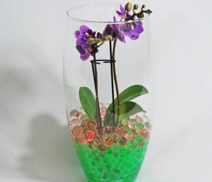 orchideja-v-gidrogele