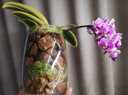 orhideja v stekljannom gorshke