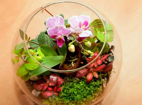 orhideya-v-kolbe