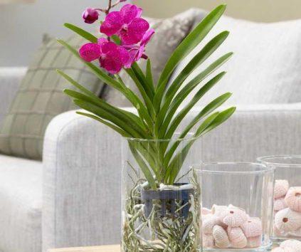 orhideya-v-stekle
