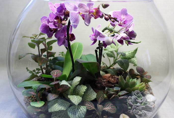 orhideja v zakrytoj sisteme