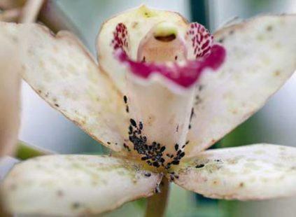 tlja na cvetah orhidei