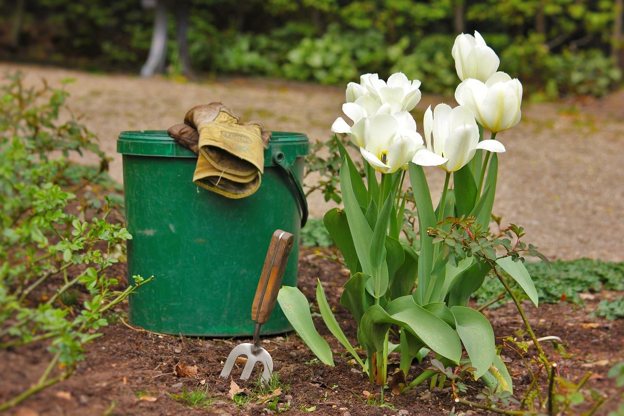 высадка тюльпанов