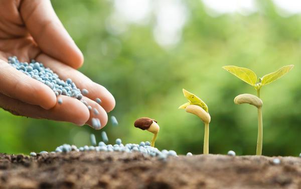 Удобрение Аммофос эффективное комплексное удобрение
