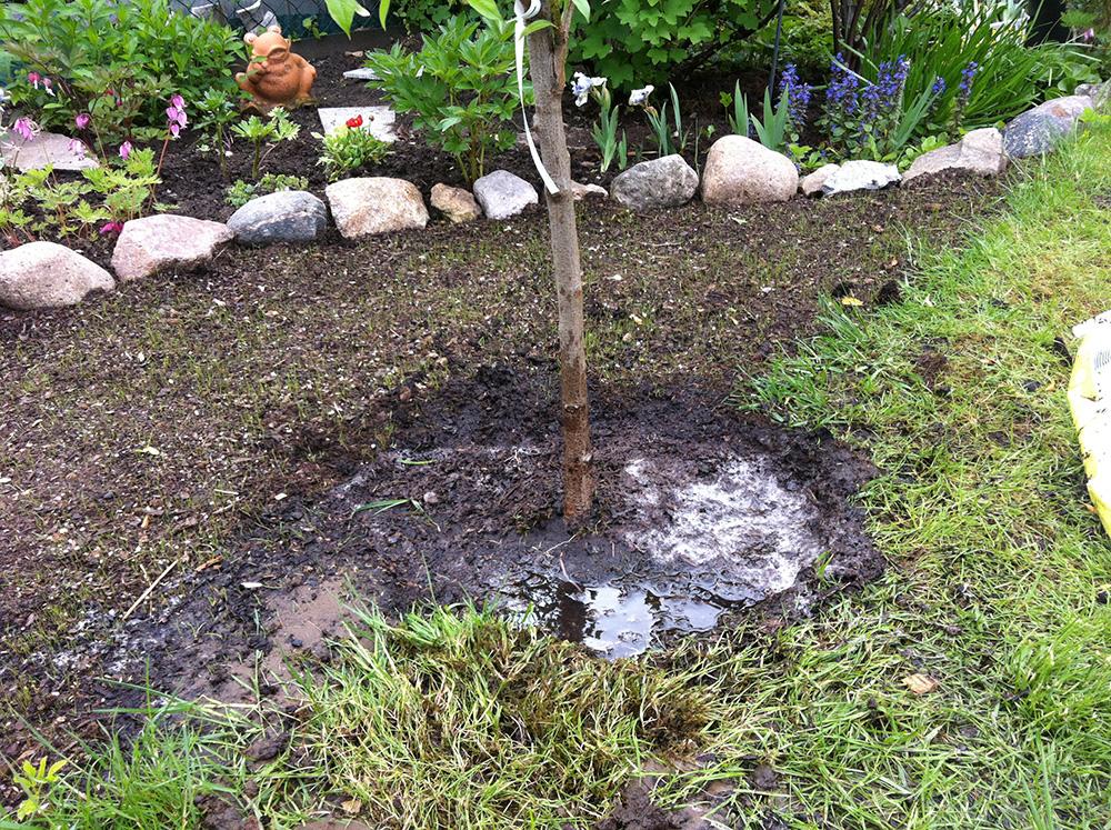 удобрение персика осенью