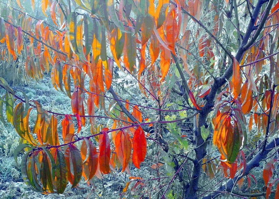 Уход за персиком осенью, цели проведения работ
