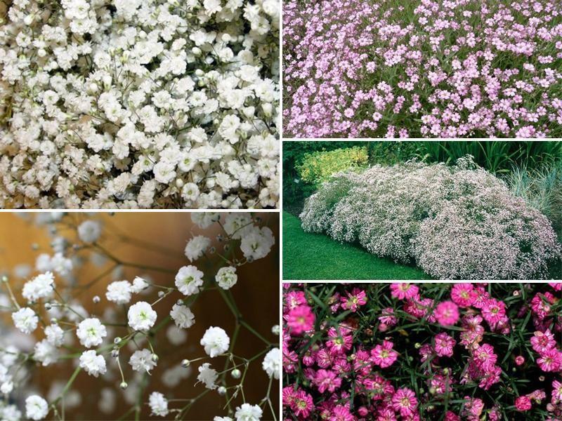 виды цветков