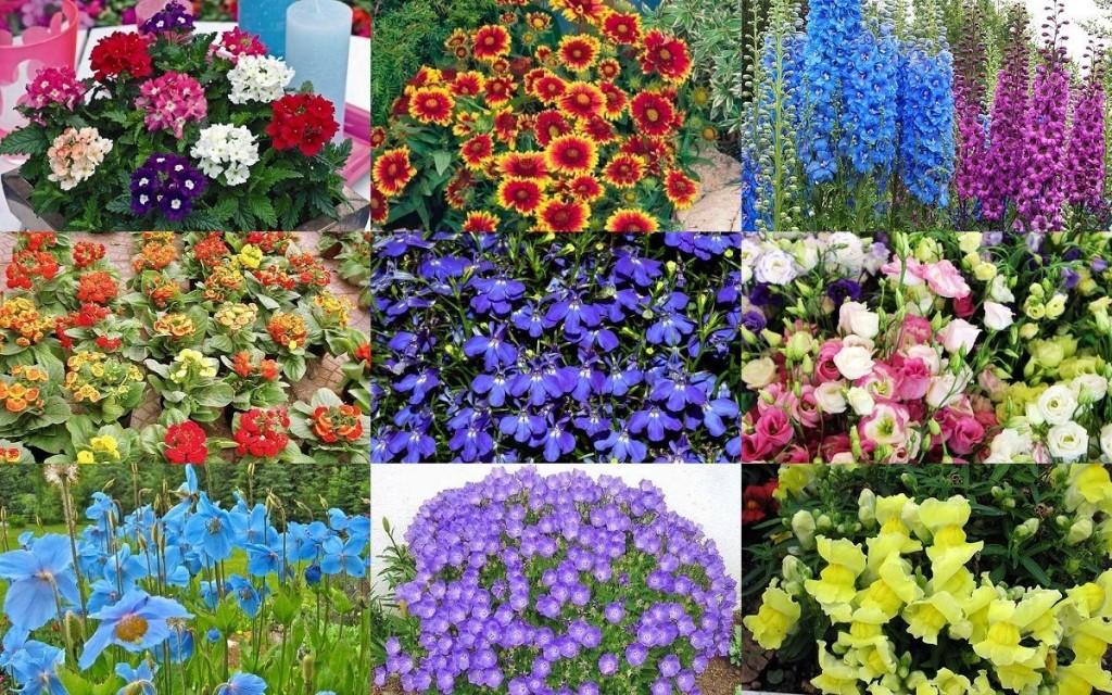 цветы на адче