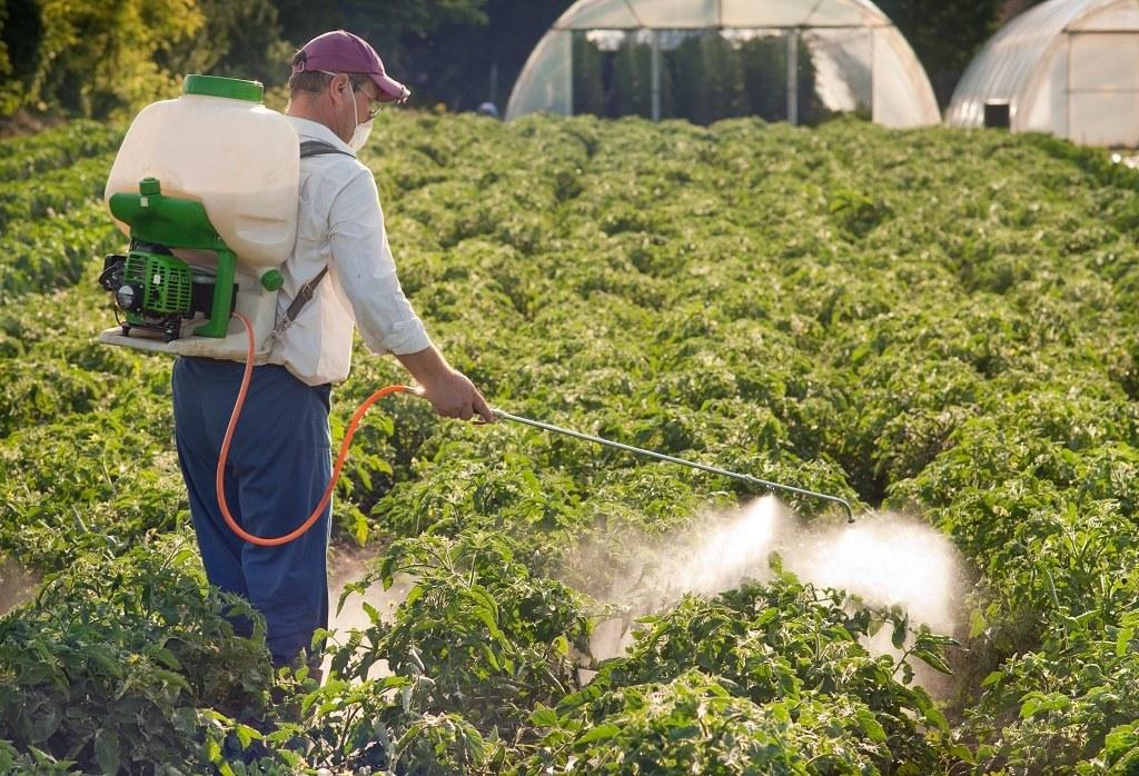 обработка картофеля гербицидами