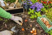 Если вы не знаете, какие цветы сажают под зиму семенами, выберите несколько однолетников