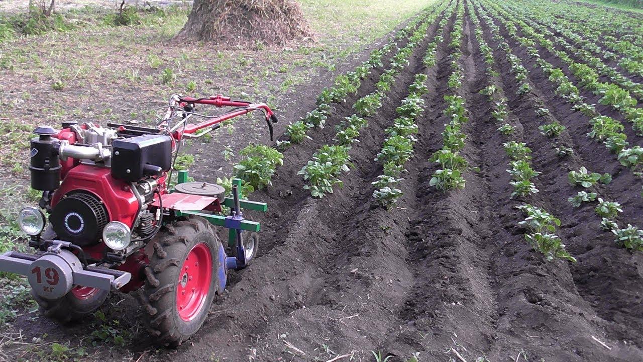 Окучивание картофеля мотоблоком и культиватором: как правильно, пошаговое руководство, видео, отзывы