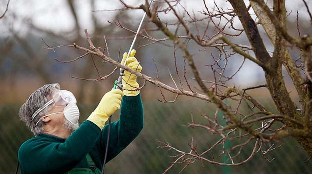Чем обработать деревья и кустарники осенью от вредителей и болезней