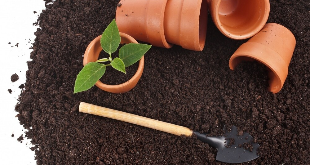 Можно ли выращивать перец в открытом грунте на урале?