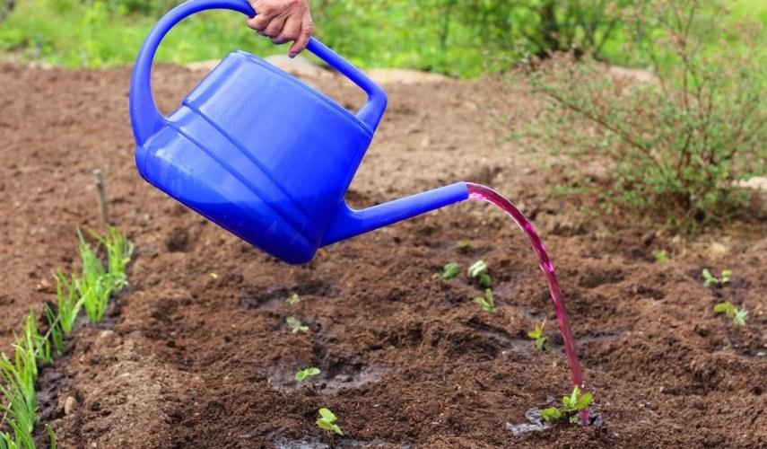 можно ли рассаду поливать зеленкой